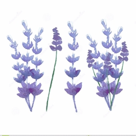 cropped-vector-watercolor-lavender-delicate-bunch-set-pastel-nature-aromatherapy-elements-herb-garden-plant-48321911
