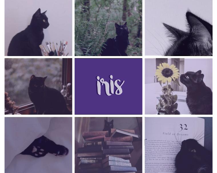 iris moodboard.png